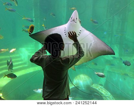A Boy In Wonder As He Looks At A Beautiful Sea Creature.