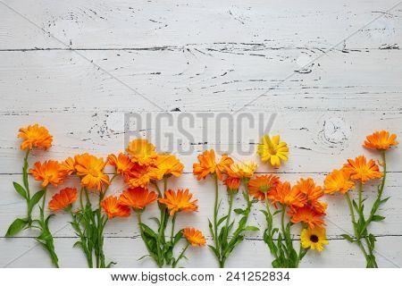 Pot Marigold (Calendula officinalis) on white table