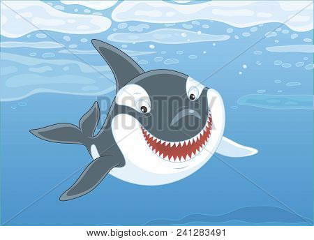 Killer Whale Swimming Among Drifting Ice Floes In Blue Water Of A Polar Sea, Vector Illustration In