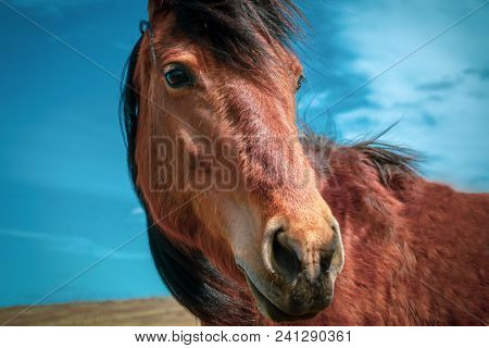 Horse On Nature. Portrait Of A Horse, Red Horse