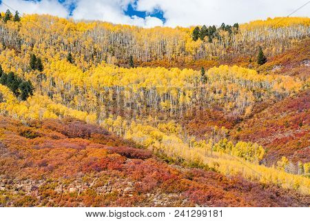 Aspen Grove Over Rolling Hills Of Colorado In Autumn