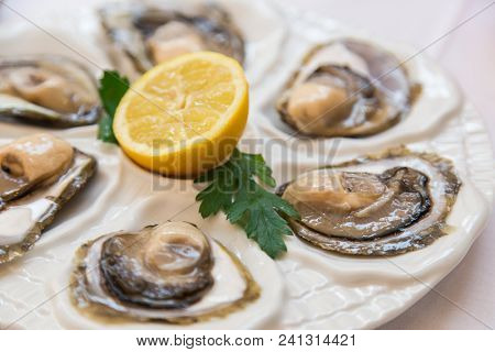 Closeup of a fresh plate of open oysters with a slice of lemon as an appetizer