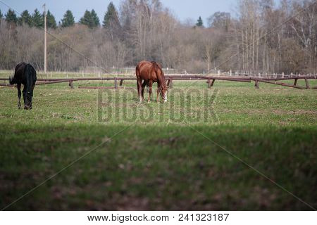 Horses For A Walk In The Daytime Solar Time.