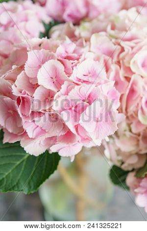 Beautiful Hydrangea Flowers In A Vase On A Table . Bouquet Of Light Blue, Lilac And Pink Flower. Dec