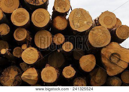 Log House, Logs Close Up, The Sawmill