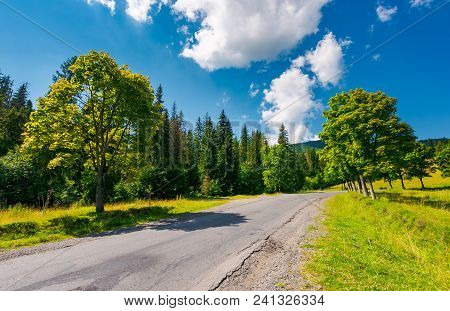 Trees By The Road In Mountains. Beautiful Nature Scenery In Mountainous Area. Lovely Transportation