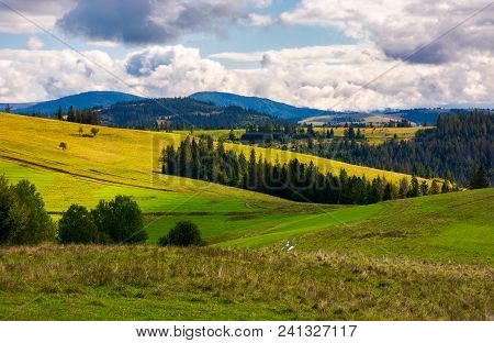 Forested Grassy Hills On A Cloudy Day. Lovely Landscape Of Carpathian Mountains In Autumn