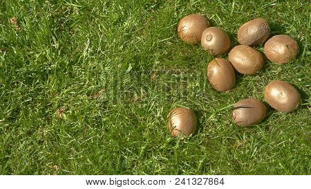 Kiwi Fruit Laying In The Grass In The Sun