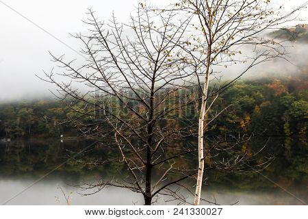 Trees near lake with autumn colored treee in background
