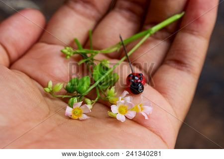 Pink Wild Flower With Green Fruit And Lady Bug Clay Head Pin On Girl Hand
