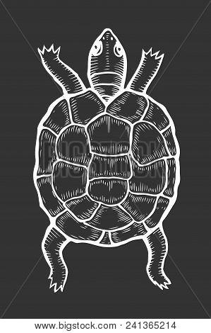 Sea Turtle Illustration, Drawing, Engraving, Ink Line Art Vector