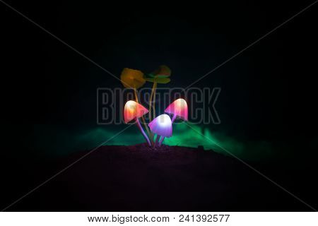 Three Fantasy Glowing Mushrooms In Mystery Dark Forest Close-up. Beautiful Macro Shot Of Magic Mushr