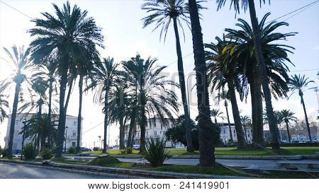 View Of The Tall Palm Trees On A Sunny Day. Stock. Beautiful Tall Palm Trees In Urban Environment.