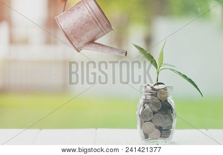 Money Saving And Investment Financial, Savings And Making Money Concept. Plant Growing In Savings Co