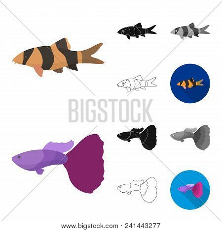 Different Types Of Fish Cartoon, Black, Flat, Monochrome, Outline Icons In Set Collection For Design