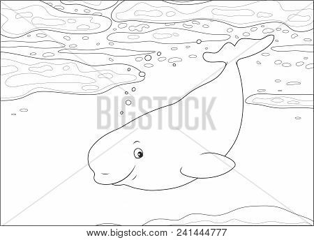 Beluga Whale Swimming Among Drifting Ice Floes In A Polar Sea, Black And White Vector Illustration I