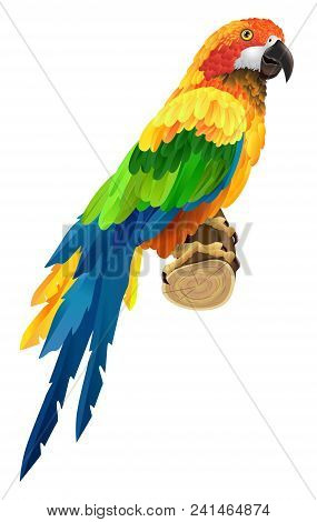 Beautiful Colorful Parrot On Twig. Bird, Fauna, Wildlife. Tropics Concept. Can Be Used For Greeting