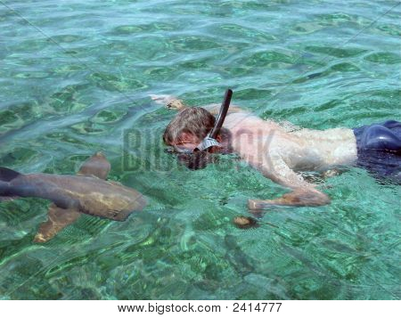 Snorkeling in Shark Alley with a Curious Nurse Shark poster