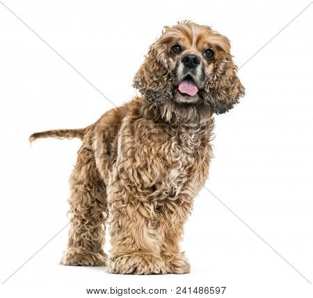 Brown Mixed-breed dog panting against white background