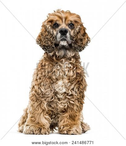 Brown Mixed-breed dog against white background