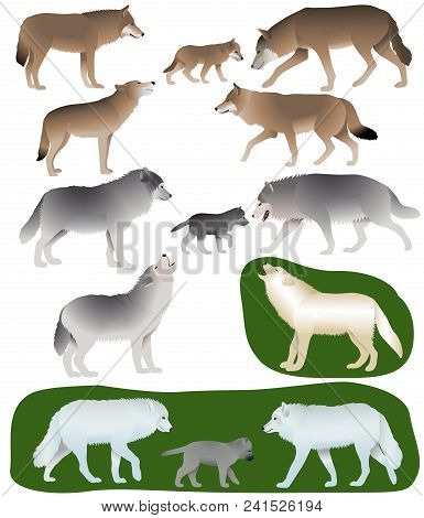 Collection Of Different Species Of Wolves And Wolf-cubs