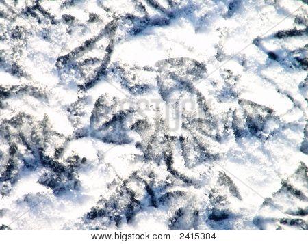 Birds Footprints On Snow