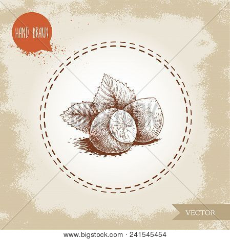 Hand Drawn Sketch Style Hazelnut Group. Whole Nuts With Leaves. Eco Forest Nut Filbert. Vector Illus
