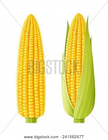 Corn Cob. Organic Food. Corncob Natural Meal. Ripe Maize. Product For Cooking Popcorn. Healthy Eatin