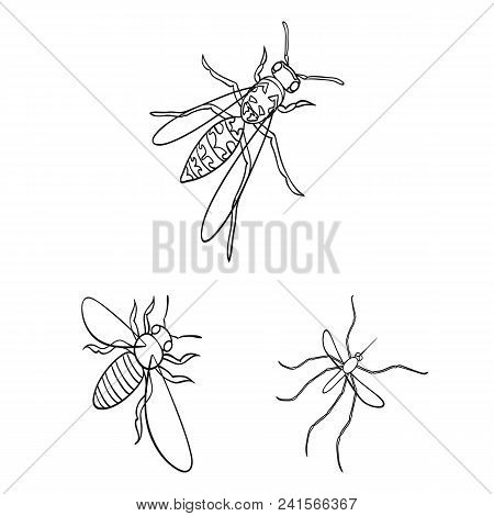 Different Kinds Of Insects Outline Icons In Set Collection For Design. Insect Arthropod Vector Isome