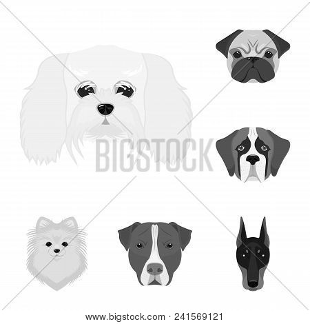 Dog Breeds Monochrome Icons In Set Collection For Design.muzzle Of A Dog Vector Symbol Stock  Illust