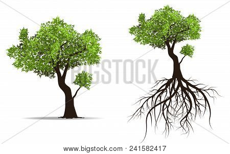 Big Tree With Root