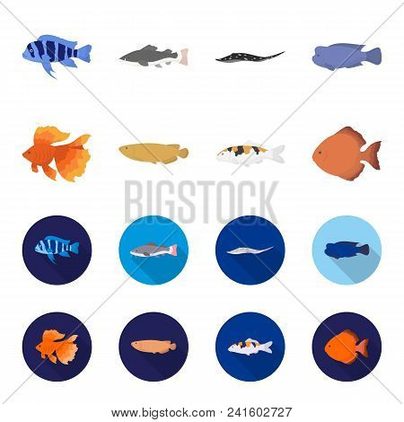 Discus, Gold, Carp, Koi, Scleropages, Fotmosus.fish Set Collection Icons In Cartoon, Flat Style Vect