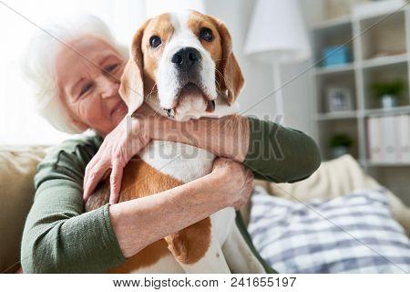 Portrait Of Elegant Senior Woman Hugging Pet Dog Tenderly And Smiling Happily While Enjoying Weekend