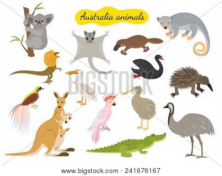 Set Of Australia Animals On White Background. Vector Illustration.