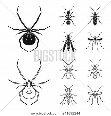 Spider, Ant, Wasp, Bee .insects Set Collection Icons In Black, Outline Style Vector Symbol Stock Ill