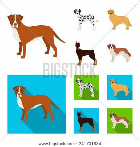 Dog Breeds Cartoon, Flat Icons In Set Collection For Design.dog Pet Vector Symbol Stock  Illustratio