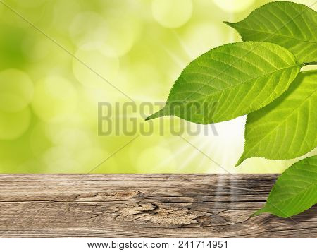 Abstract Summer Spring Eco Nature Bokeh Background With Green Tree Leaves And Vintage Wooden Table S