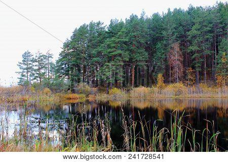 Spruce forest. Autumn nature. Autumn russian forest. The northern forest. Nature Reserve. The autumn yellow woods. Golden autumn. Lake in autumn forest. Autumn forest reflected in the lake in september. Russian forest in autumn. The lake in Russia