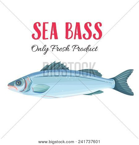Vector Sea Bass. Icon Badge Fish For Design Seafood Packaging And Market.