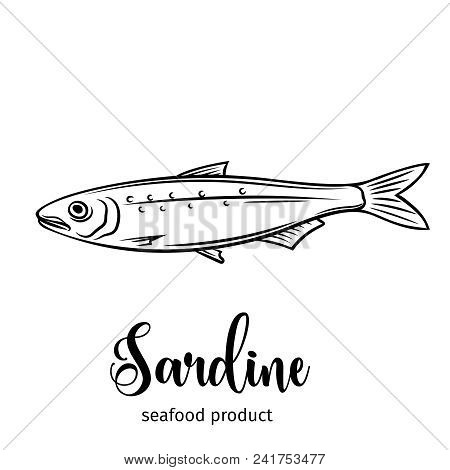 Vector Sardine. Hand Drawn Icon Badge Fish For Design Seafood Packaging And Market.