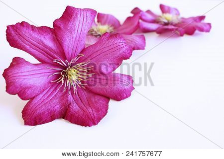 Styled Stock Photo. Spring Feminine Scene, Floral Composition. Decorative Banner Made Of Beautiful P