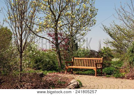 Peaceful Rustic  Bench On The Park For Lunch Setting