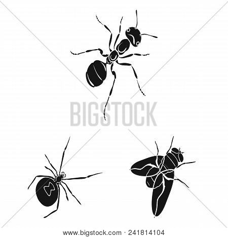 Different Kinds Of Insects Black Icons In Set Collection For Design. Insect Arthropod Vector Isometr