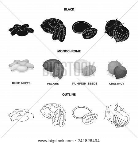 Pecan, Pine Nut, Pumpkin Seeds, Chestnut.different Kinds Of Nuts Set Collection Icons In Black, Mono
