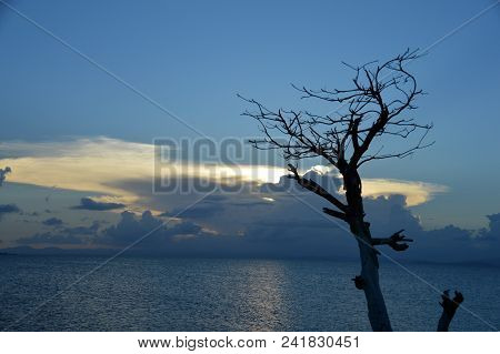 A Sunset With A Dyring (ghost) Tree In The Foreground.  This Was Taken In Puerto Rico Over The Carib