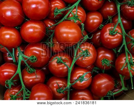 Fresh Tomatoes Cherry. Young Tomatoes Cherry Harvest. Landscape. A Backdrop Of Tomatoes Cherry. Stre