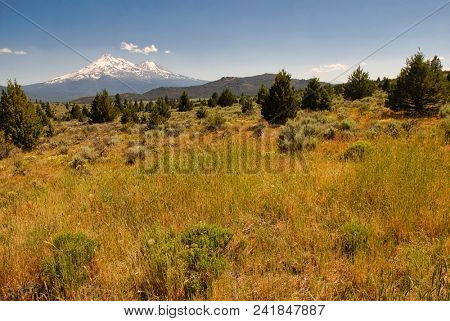 Field of native grasses, juniper and sagebrush with Mt. Shasta in the background