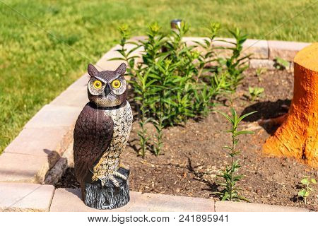 Woodsy The Decoy Owl  Protecting The Garden Plants