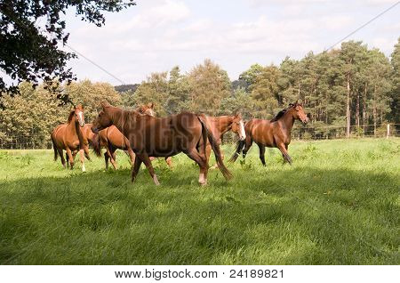 The Flock Of Horses.