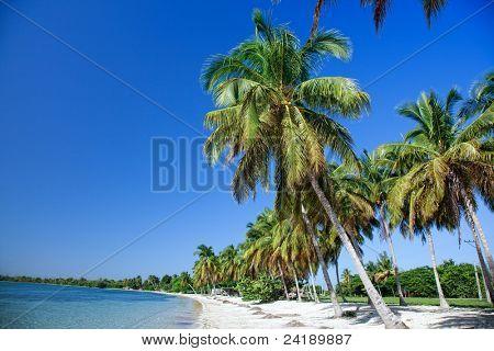 A tropical beach with a palms